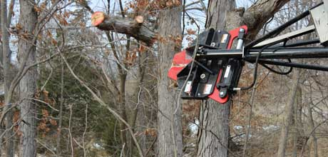Performing tree shearing/removal in Fayette, MO.